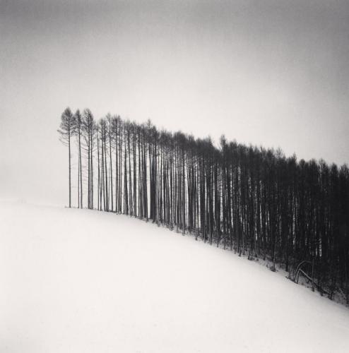 Michael Kenna, Forest Edge, Hokuto, Hokkaido, 2004.jpg